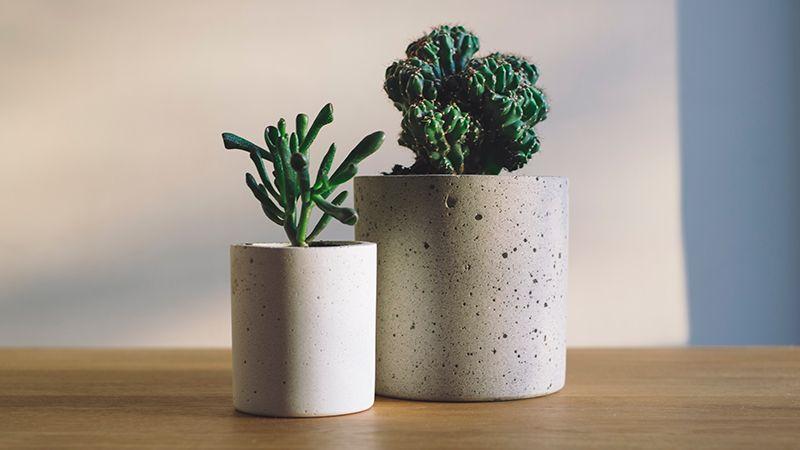 Perbedaan Fungsi Pot Terakota, Keramik, dan Plastik untuk Tanaman